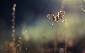 Picture macro, butterfly, spike, nasekomoe