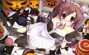 Picture Chest, Pumpkin, The maid, Ears, Kawaii, Kitty
