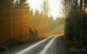 Picture road, forest, nature, fog, morning