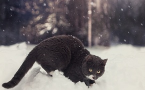 Picture winter, cat, snow, by Thunderi