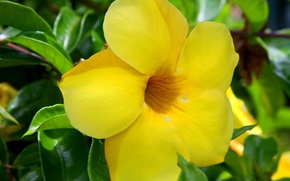 Picture green, yellow, flowers, hawaii