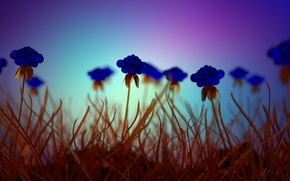 Picture grass, glass, blue flowers