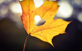Picture autumn, light, yellow, sheet, heart, heart, bokeh, maple