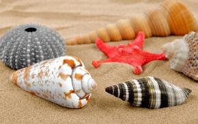 Picture sand, beach, shell, sand, starfish, seashells
