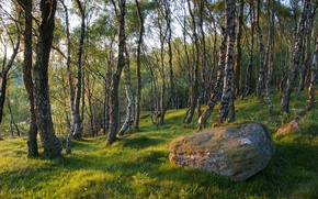Picture forest, grass, trees, stone, spring, boulder