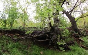 Picture tree, iran, kermanshah, paveh