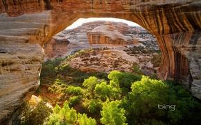 Picture trees, mountains, bridge, rocks, arch, Utah, USA, Natural Bridges National Monument