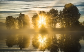 Picture the sun, trees, nature, fog, river
