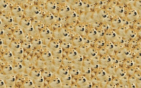 Picture Dog, Dog, Texture, Texture, Doge