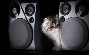 Picture kitty, black background, music speakers