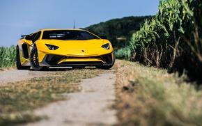 Picture Lamborghini, Aventador, LP-750