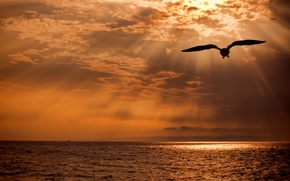 Picture sea, the sun, light, clouds, bird, Japanese