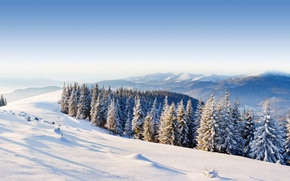 Picture winter, forest, the sky, snow, trees, mountains, hills, spruce