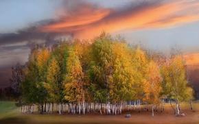 Picture field, autumn, sunset, nature, birch