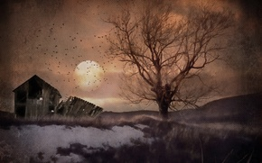 Picture landscape, night, tree