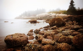 Picture sea, forest, water, nature, fog, stones, morning, new England