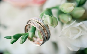 Picture flowers, holiday, ring, wedding