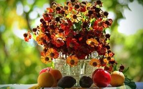 Picture autumn, bouquet, fruit, gelenium