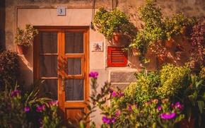Wallpaper house, flowers, door