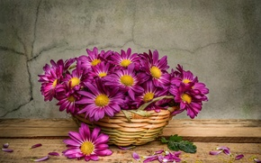 Picture drops, flowers, chamomile, still life