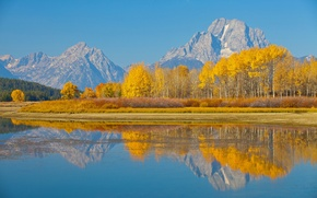 Picture autumn, trees, nature, lake, USA, Wyoming, Grand Teton national Park, Mount Moran