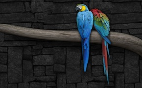 Picture wall, figure, branch, Parrot
