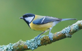 Wallpaper branch, legs, wings, bird, beak, titmouse