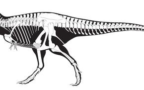 Picture white, black, skeleton, dinosaur, Tyrannosaurus