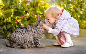 Wallpaper cat, girl, the situation, mood, joy, friends, kiss, cat