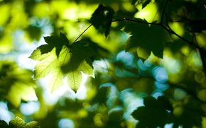 Picture forest, summer, leaves, light, trees, nature, foliage, day