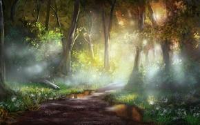 Wallpaper flowers, puddles, jjpeabody, art, forest, trail