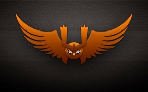 Picture look, owl, wings, eyebrows, the dark background