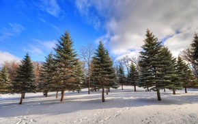 Picture winter, forest, the sky, clouds, snow, trees, traces, spruce