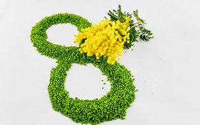 Picture flowers, yellow, green, March 8, women's day, Mimosa