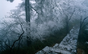 Wallpaper road, ladder, winter