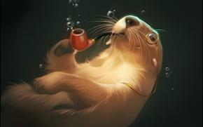 Picture water, bubbles, tube, art, monocle, otter, otter