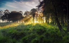 Picture autumn, the sky, grass, the sun, rays, light, trees, fog, Rosa, tree, England, October, morning, …