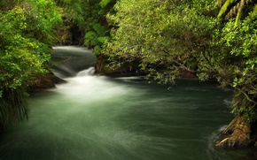 Wallpaper New Zealand, greens, stream, the bushes, branches, for, Okere Falls