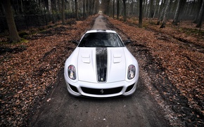Picture autumn, forest, leaves, one, Ferrari, Ferrari, supercar, 599, GTO