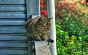 Picture cat, cat, garden, railings, lies, looks, green-eyed, the observer, Wallpaper from lolita777
