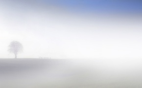 Picture field, fog, silhouettes