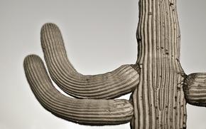 Wallpaper cactus, the sky, gatespasssaguaro