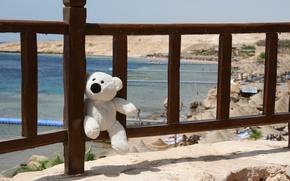 Wallpaper toy, stay, Egypt, smile, journey, sea, mood, bear