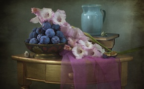 Picture texture, shell, pitcher, still life, plum, gladiolus