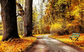 Picture road, autumn, leaves, trees, bench, nature, Park, yellow, shop, shop, the bushes, bench