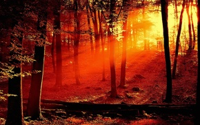 Wallpaper trees, red, Light