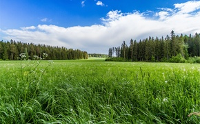 Picture grass, forest, sky, trees, field, landscape