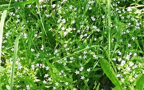 Picture Flowers, Grass, White