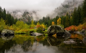 Picture forest, trees, mountains, fog, lake, stones