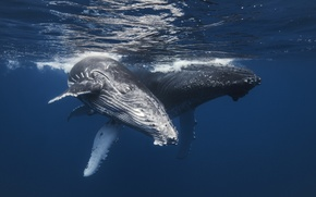 Picture sea, nature, whales